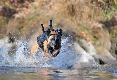 bomb dog