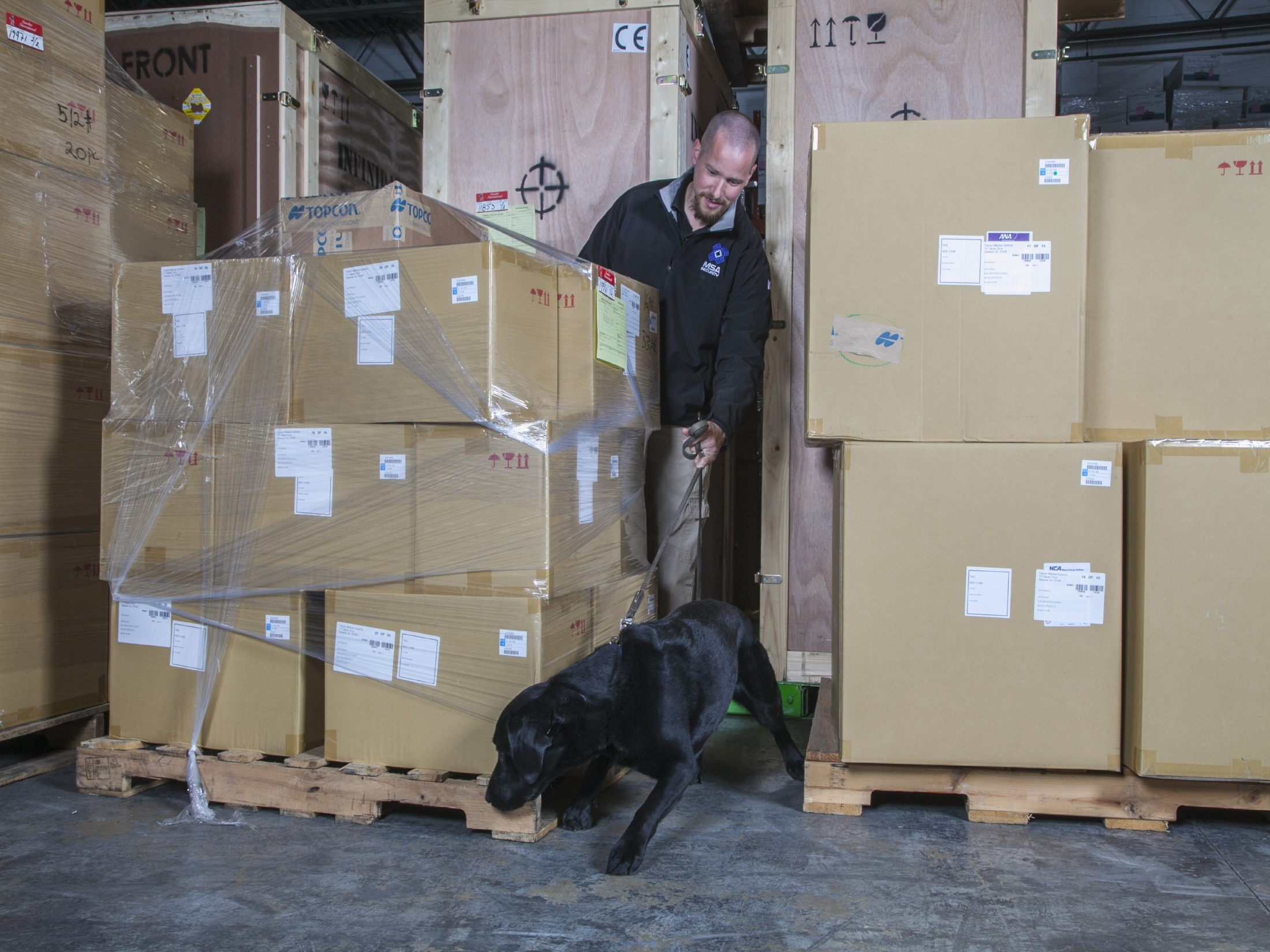 MSA Bomb Sniffing Dog Screening Cargo for Explosives
