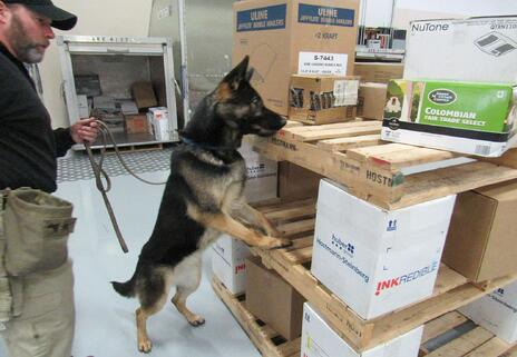 Shepherd Pallet Search