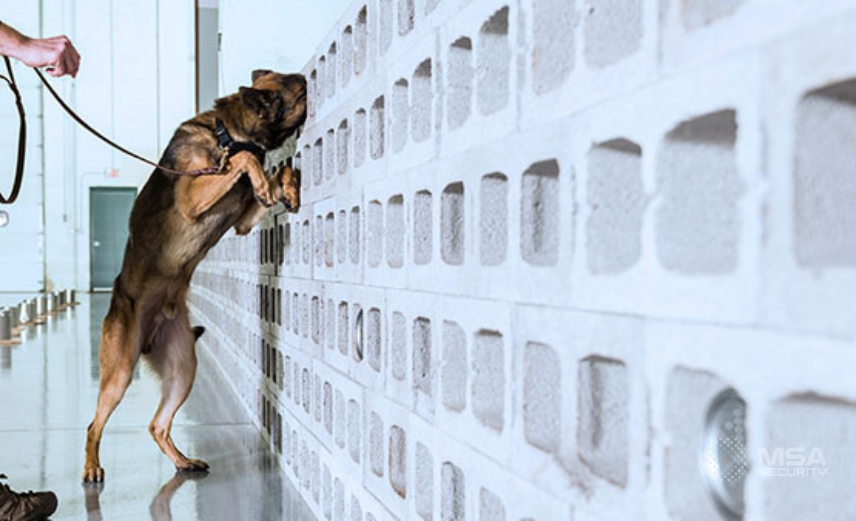 canine wall watermark
