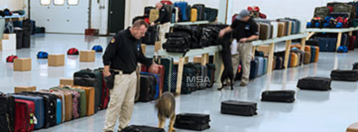 training page_luggage_watermark